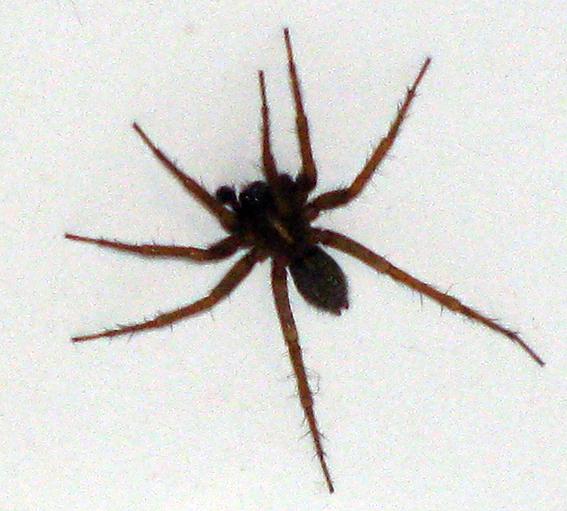 arachnide2